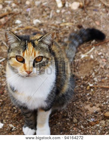 Cat with unusual Brown eyes sits on the ground focus on the eyes