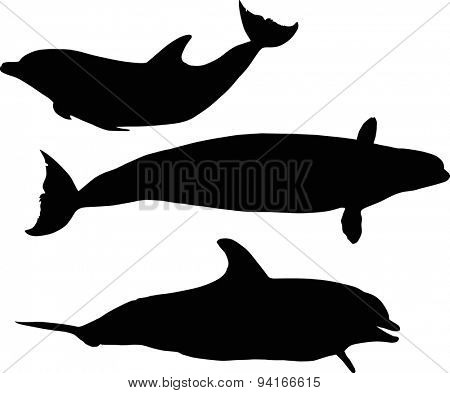 illustration with dolphins collection isolated on white background