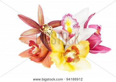 Collection Of Cymbidium Flower Orchid Close Up Isolated On White Background.