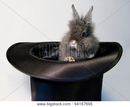 Rabbit bunny in top hat