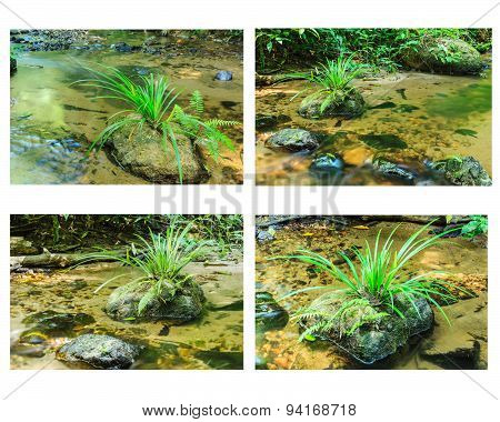 Collection Of Green Grass On Stone In Stream.