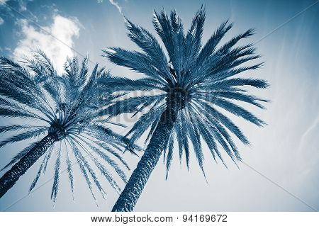 Two Palm Trees Over Cloudy Sky Background.