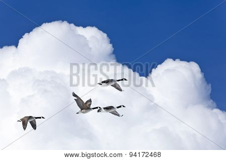 Blue sky, a group birds and background with clouds.