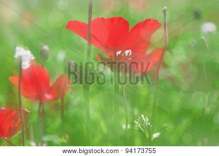 Blurry Blossom Background