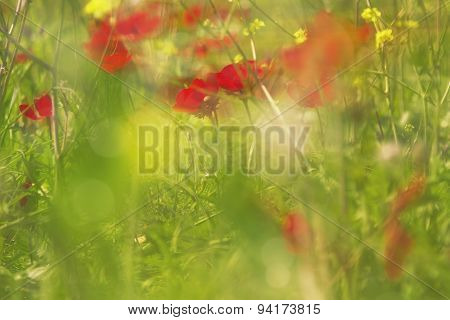 Abstract Blurry Background Of Sunset Meadow