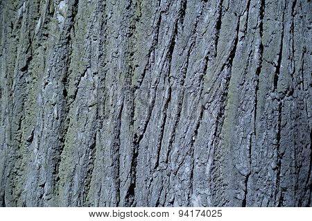 Texture Of Old Tree Bark With Green Moss