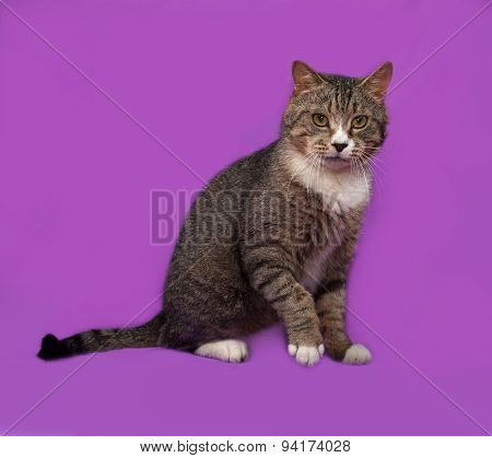 Gray And White Tabby Cat Sitting On Lilac