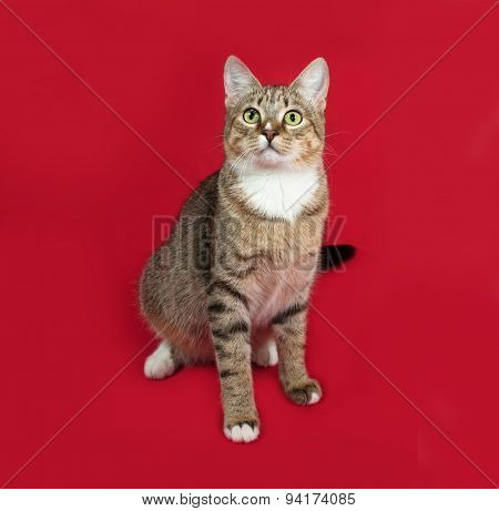 Striped And White Cat Sitting On Red
