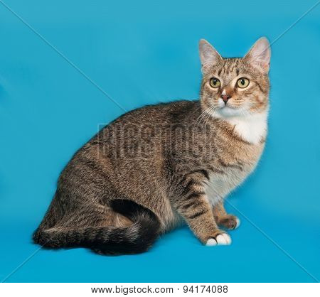 Striped And White Cat Sitting On Blue