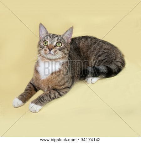 Striped And White Cat Lies On Yellow