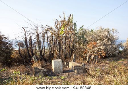 Damaged Picnic Benches And Burnt Tropical Vegetation After Destructive Fire