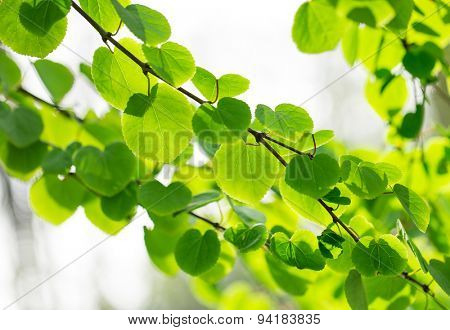 Green leaves background with foliage bokeh