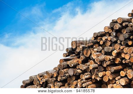 Pile Of Raw Wood Logs