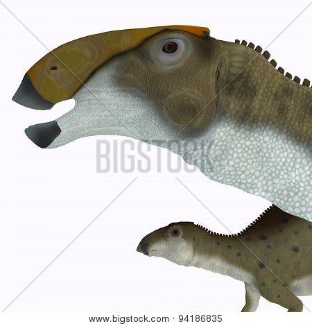 Brachylophosaurus Dinosaur Head