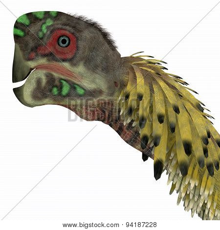 Citipati Dinosaur Head