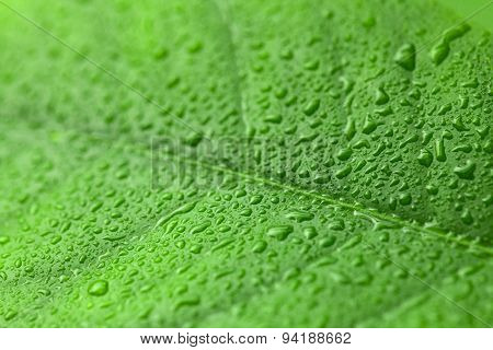 Green Leaf With Drops Of Water Over It