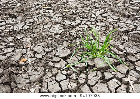 Grass In The Dry Ground