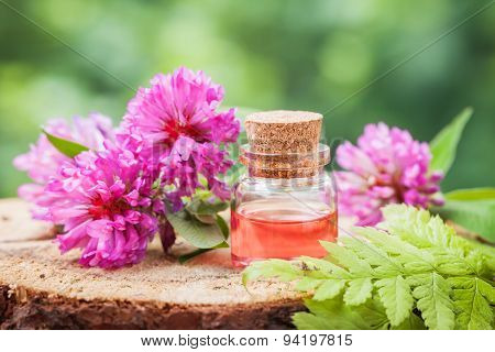 Bottle Of Elixir Or Essential Oil And Bunch Of Clover On Stump In Forest.