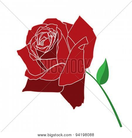 Vector Red Rose Isolated on white background. Illustration
