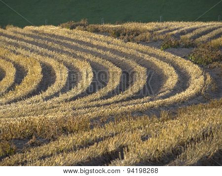 Field Furrows Rural Landscape