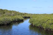 stock photo of tropical rainforest  - The foothills of a mangrove forest at a tropical coast - JPG
