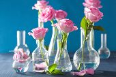 foto of flask  - pink rose flowers in chemical flasks over blue - JPG