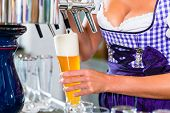 picture of drawing beer  - Innkeeper in Bavarian pub drawing beer - JPG