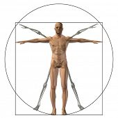 pic of male body anatomy  - Vitruvian human or man as a concept - JPG
