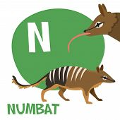 picture of letter n  - Funny cartoon animals vector alphabet letter for kids from A to Z - JPG