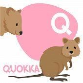 stock photo of quokka  - Funny cartoon animals vector alphabet letter for kids from A to Z - JPG