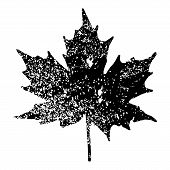 picture of canada maple leaf  - Maple Leaf Silhouette for your design - JPG