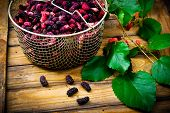 image of mulberry  - the berries of an organic mulberry picked in a garden - JPG