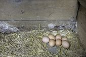 pic of laying eggs  - Seven brown organic chicken eggs laying in the right corner of a wooden and open nest box with straw. Every morning the owner finds seven eggs from her seven hens.  Photo taken in May 2015. - JPG