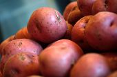 image of solanum tuberosum  - Pile of raw red new potatoes against a blue gray background - JPG