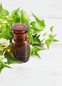stock photo of nettle  - nettle essence oil and fresh branches blooming nettle - JPG