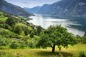 picture of fjord  - Fjord landscape in Norway  - JPG
