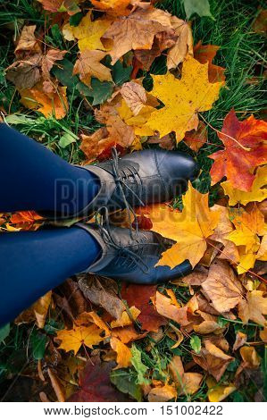 Woman legs in boots and tights standing straight on fallen autumn leaves top view