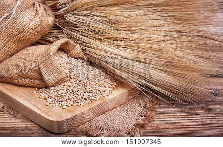 Wheat grains, harvest on the farm, ears of wheat, burlap sack of grain