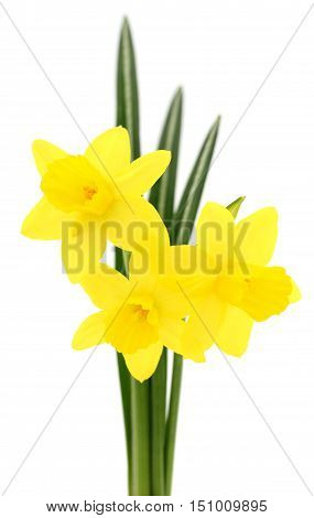 Bouquet yellow flowers isolated on the white