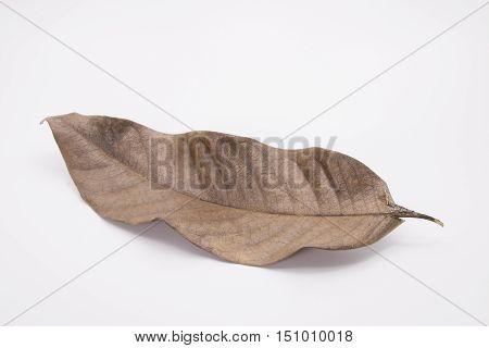 Old Dry Leaf Laying on White Background