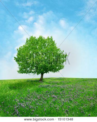 árbol del roble en el campo de la flor