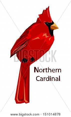 Northern cardinal, Red Cardinal bird, vector illustration bird, wildlife.