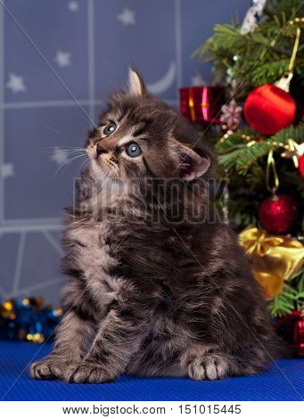Cute fluffy kitten over Christmas spruce background