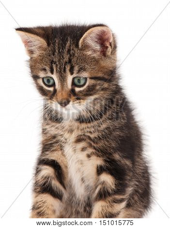 Cute small kitten looks guilty over white background close-up