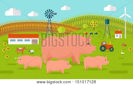 Farmyard vector illustration. Flat design. Pigs standing against the farm landscape, tractor, cow, fields on background. Organic farming concept. Traditional agriculture. Modern ecological farm.
