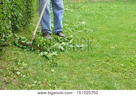 Cleaning up the lawn of back yard with rake