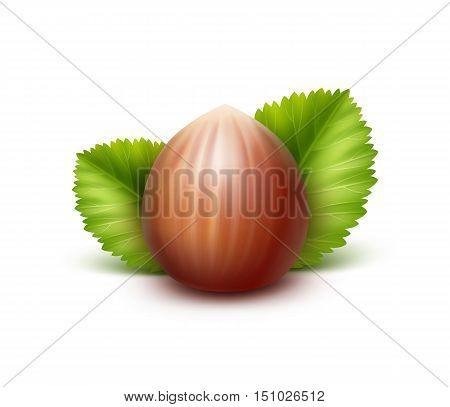 Vector Full Unpeeled Realistic Hazelnut with Leaves Close up Isolated on White Background