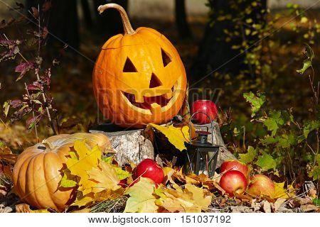 Halloween pumpkin on a stump in the autumn forest.