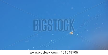 Little spider on a spider web on a background of blue sky.