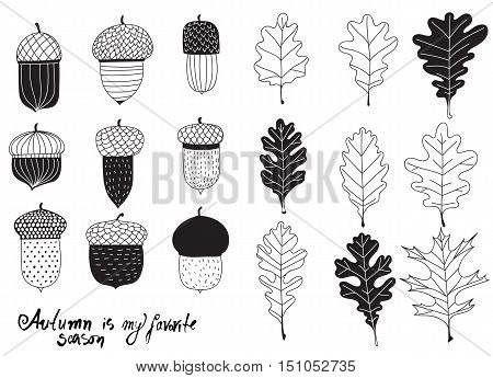 Collection Of Various Acorns And Leaves